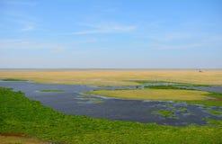 Amboseli nationalpark, Kenya Royaltyfri Foto
