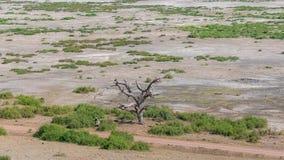 Amboseli park in Kenya royalty free stock photography