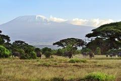 Amboseli park narodowy Zdjęcie Royalty Free