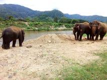 amboseli słoni rodzinny Kenya park narodowy Zdjęcie Stock