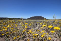 Amboy Crater in Spring royalty free stock photo
