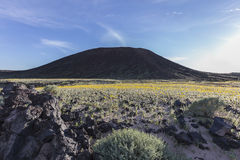 Amboy Crater Volcanic Mountain with Spring Blooms Stock Photography
