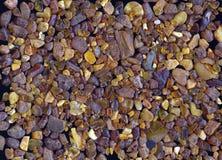 Ambra baltica, 1 Fotografia Stock