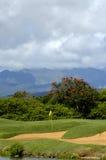 Ambroisie d'un terrain de golf Image stock