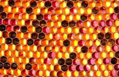 Ambrosia - food for the bees Royalty Free Stock Photo