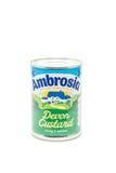 Ambrozi Devon Custard na bielu Zdjęcie Royalty Free
