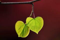 Ame as folhas verdes imagem de stock
