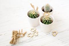 Ame los cactus de los corazones con la cuerda de madera y natural Fotografía de archivo
