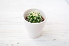 Ame los cactus de los corazones con la cuerda de madera y natural Foto de archivo