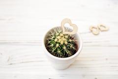 Ame los cactus de los corazones con la cuerda de madera y natural Fotos de archivo