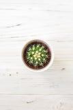 Ame los cactus de los corazones con la cuerda de madera y natural Imagenes de archivo