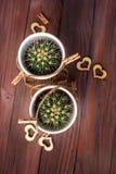 Ame los cactus de los corazones con la cuerda de madera y natural Foto de archivo libre de regalías