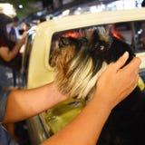 Ame-me amor meu cão Fotos de Stock Royalty Free