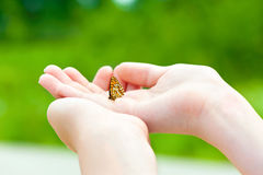 Ame a natureza Mãos da menina que guardam uma borboleta pequena Fotos de Stock