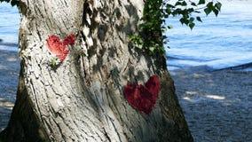 Ame y proteja los árboles Fotografía de archivo libre de regalías