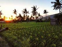 Amed巴厘岛 库存照片