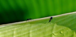 Ameise auf Blatt Lizenzfreie Stockfotos