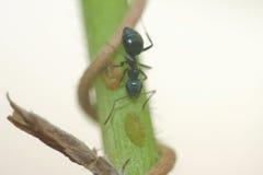Ameise auf dem Stamm Stockfotos