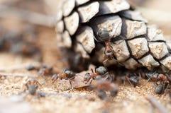 Ameise auf der Unterwelt Stockfotos