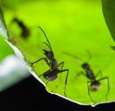 Ameise auf grünem Blatt stockfotografie