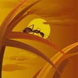 Ameise auf Gras Lizenzfreies Stockfoto
