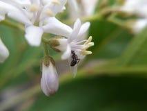 Ameise an der Blume Stockbild