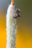 Ameise an der Spitze stockbilder