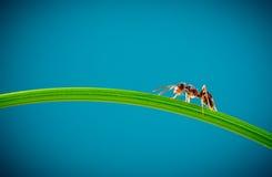 Ameise und grünes Gras Stockfoto