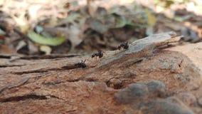 Ameise und Menschenleben stockfoto