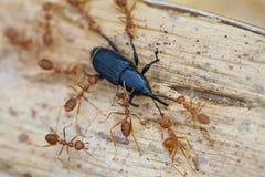 Ameisen Lizenzfreies Stockfoto