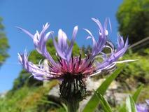 Ameisen auf Blume Lizenzfreie Stockfotos