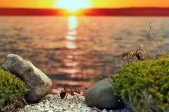 Ameisen auf der Bucht Inszenierter Rahmen Lizenzfreie Stockfotos