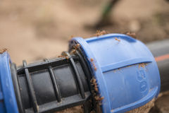 Ameisen auf der Rohrverschraubung im Bauernhof lizenzfreie stockbilder