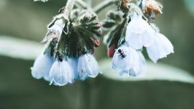 Ameisen auf einem netten Hintergrund der Blume stock footage