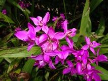 Ameisen auf purpurroten Blumen lizenzfreies stockbild