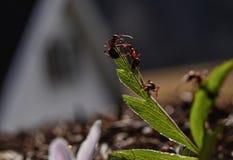 Ameisen bei der Arbeit Stockbild