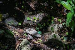 Ameisen in carying Grünblättern der Natur Lizenzfreie Stockfotografie