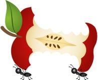 Ameisen, die Apfelkern tragen lizenzfreie abbildung