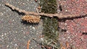 Ameisen, die stranden stock footage