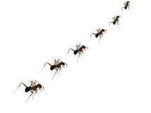 Ameisen-Disziplin lizenzfreies stockbild