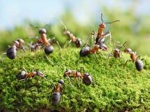 Ameisen erstellen Netz im Ameisenhaufen Lizenzfreie Stockfotos