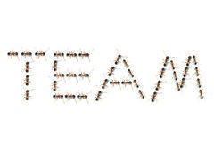 Ameisen im Teamtext Stockbilder