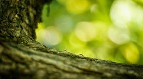 Ameisen mögen Soldaten auf dem Kamm stockbilder