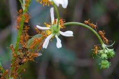 Ameisen und Biene Lizenzfreie Stockbilder