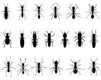 Ameisen und Termiten Stockbild