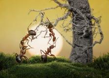 Ameisen wissen, um Spiele, wissenschaftliche Tatsache zu spielen Lizenzfreies Stockfoto