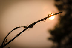 Ameisenarbeitskraftanfangsfunktion Lizenzfreie Stockfotografie