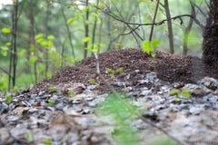 Ameisenhügel stockbild
