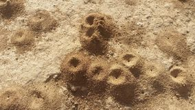Ameisenhügel ameisenbau Stockbild