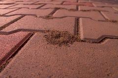 Ameisenhügel hergestellt in der Pflasterung Lizenzfreies Stockbild